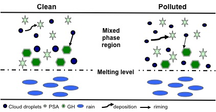 Fig. 13. Summary schematic showing the changes to the microphysical properties of the mixed-phase portion of the warm-frontal cloud and the total precipitation. Vapor deposition onto pristine ice, snow and aggregates (PSA) increases (as indicated by the change in arrow thickness) while riming of the mixed-phase species (GH) decreases. These two trends in the growth of ice mass cancel one another resulting in little change in the total ice mass and little change in rain production through melting. Differences in size and number of hydrometeors between the clean and polluted scenarios indicate qualitative changes.
